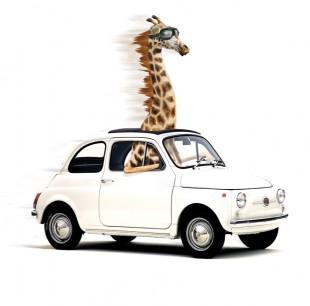 snelle-giraffe-in-kleine-auto